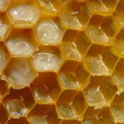 How do honeybees make wax ? - A-1 Honey south Africa