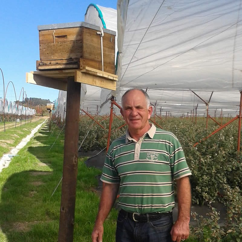 Blueberry Pollination Services in South Africa - A-1 Honey