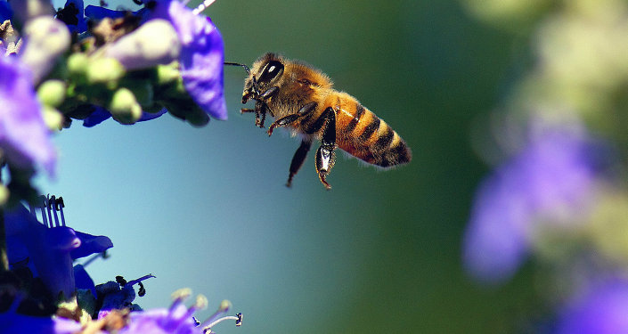 Honeybees with Alzheimers Disease - A-1 Honey News