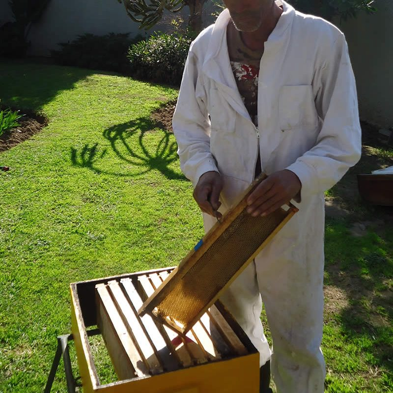 Producing Raw Cape Honey in South Africa - A-1 Honey