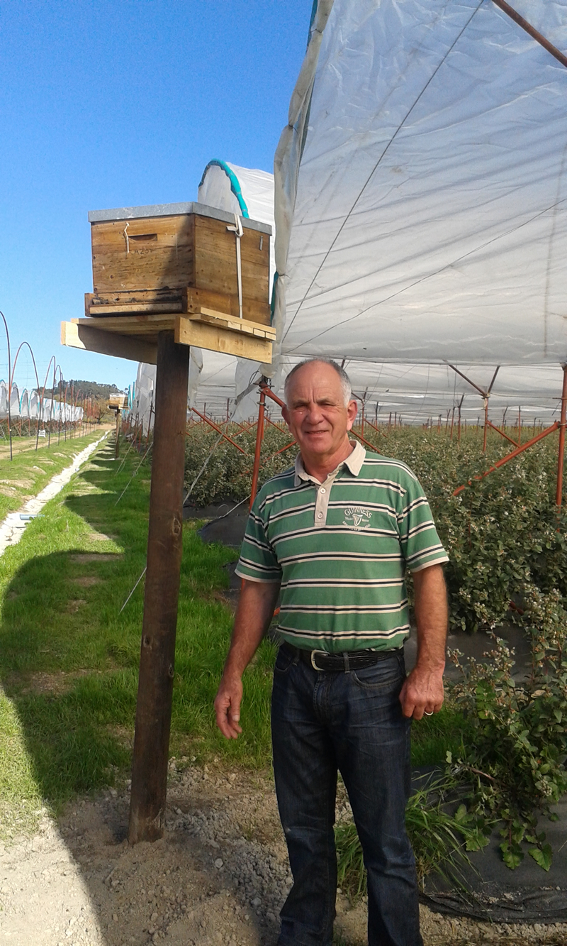 Pieter Theron at one of the Blueberry farms where the A-1 Honey bees pollinate - Contact Us for blueberry pllination in the Western Cape