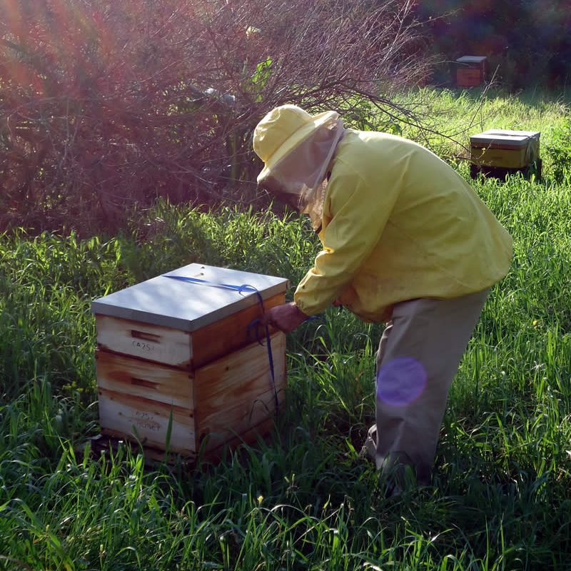 Producing Raw Honey in the Western Cape - A-1 Honey